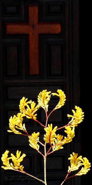 Chapel Door & Blossoms