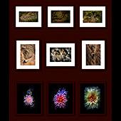 Three-Triptychs-170sq