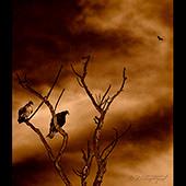 Lake-Poway-140527-024-1b-170sq
