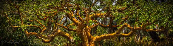 Balboa Park Tree 140524 121_2_3 2a 600w